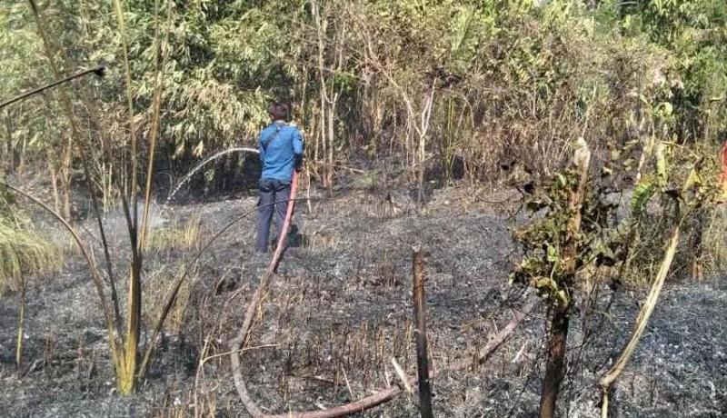www.nusabali.com-kekeringan-hektaran-kebun-terbakar