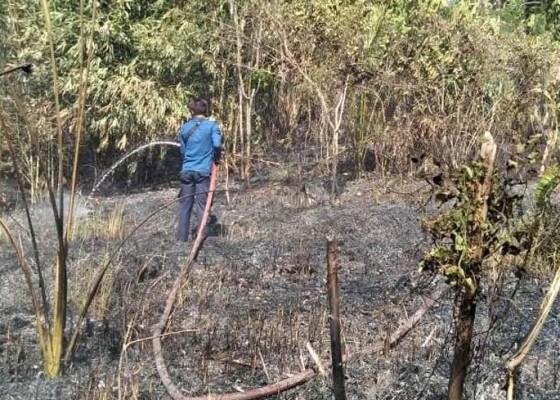 Nusabali.com - kekeringan-hektaran-kebun-terbakar