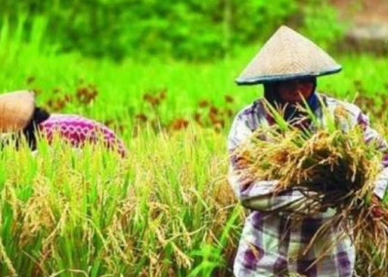 Nusabali.com - pertanian-bali-butuh-badan-penyangga