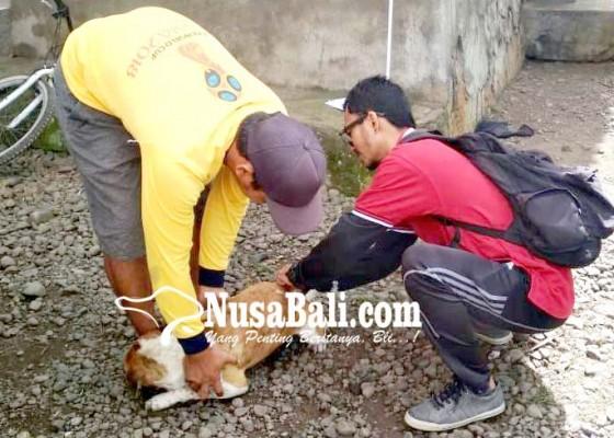 Nusabali.com - 10-bulan-11-kasus-anjing-rabies-di-9-desa