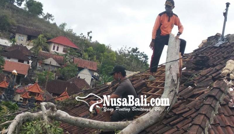www.nusabali.com-dahan-beringin-di-pura-bukit-buluh-tumbang