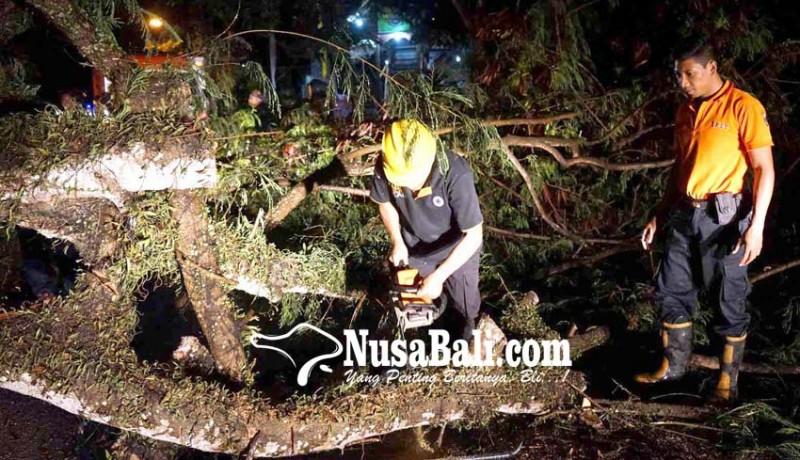www.nusabali.com-pohon-tumbang-antrean-hingga-3-km