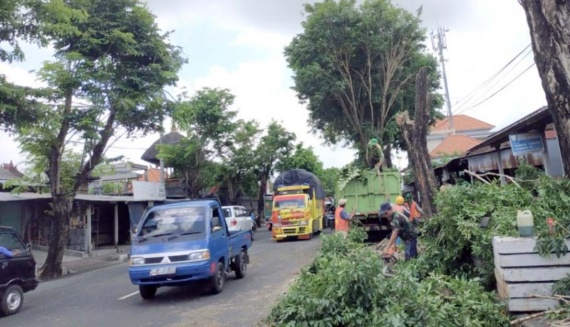 www.nusabali.com-penataan-trotoar-dan-drainase-58-pohon-perindang-ditebang