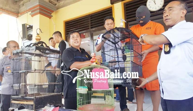 www.nusabali.com-tak-jera-residivis-bawah-umur-curi-burung
