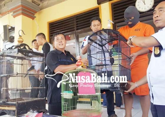 Nusabali.com - tak-jera-residivis-bawah-umur-curi-burung