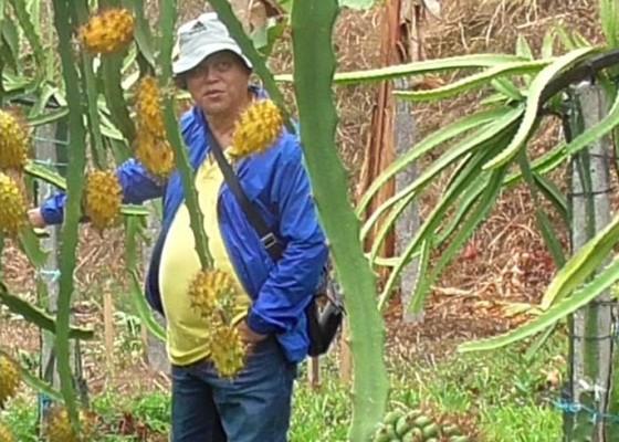 Nusabali.com - masih-langka-harga-hingga-rp-200-ribu-per-kilogram