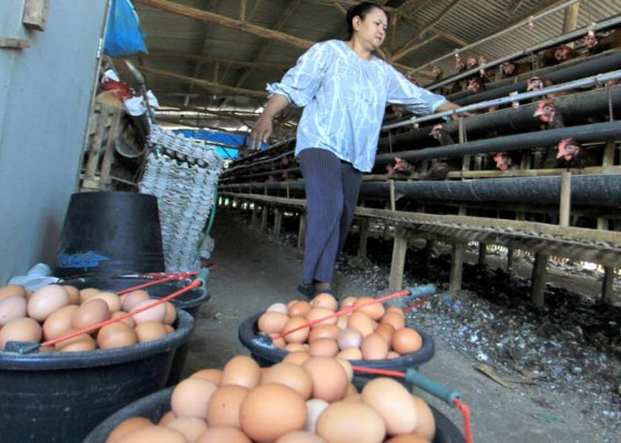 Nusabali.com - harga-telur-dan-ayam-berpotensi-naik-lagi