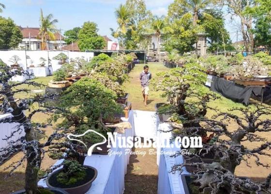 Nusabali.com - ratusan-bonsai-ikuti-kontes-nasional-di-tabanan
