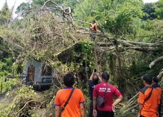 Nusabali.com - klungkung-marak-pohon-tumbang-dan-tanah-longsor
