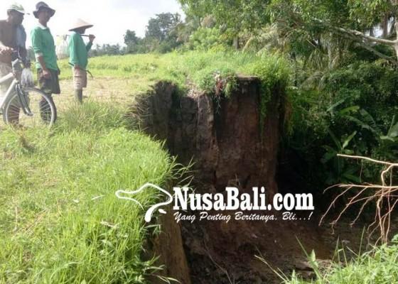 Nusabali.com - irigasi-putus-14-ha-sawah-terdampak