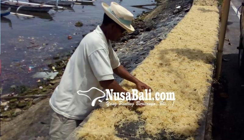 www.nusabali.com-nelayan-panen-raya-rumput-laut