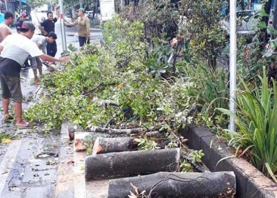 Nusabali.com - atasi-pohon-tumbang-dinas-lhk-siagakan-tim-urc