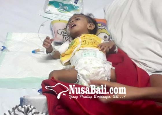 Nusabali.com - derita-hernia-bayi-asal-nusa-penida-dioperasi-berulangkali