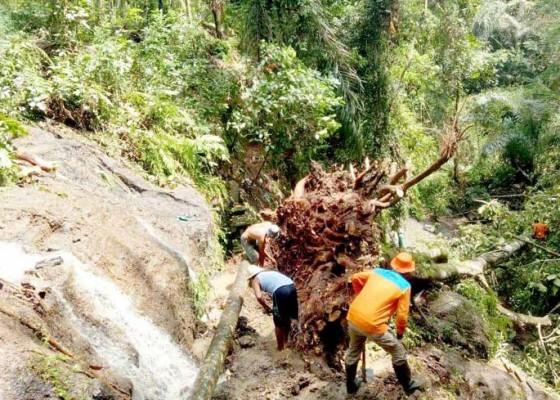 Nusabali.com - longsor-tiga-pohon-timpa-pelinggih-pura-hingga-hancur