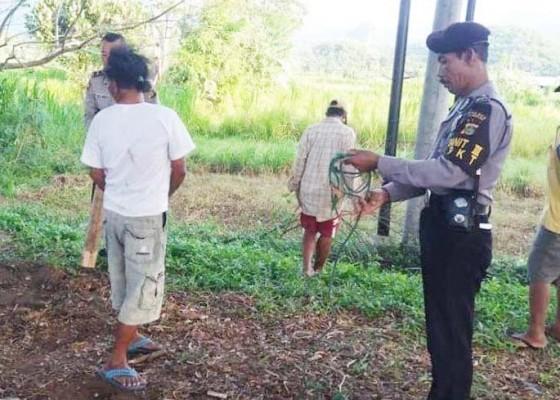 Nusabali.com - 4-ekor-sapi-di-desa-pesinggahan-dicuri