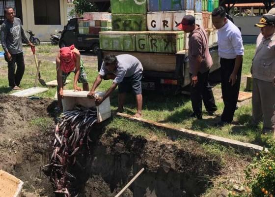 Nusabali.com - 4-ton-ikan-tongkol-ilegal-dimusnahkan
