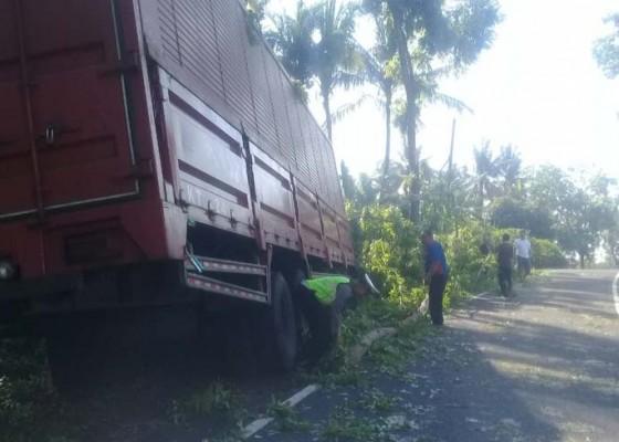 Nusabali.com - hindari-motor-truk-kontainer-hantam-pohon-perindang
