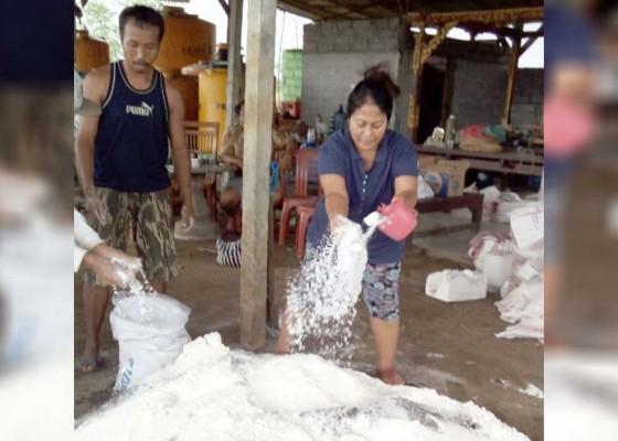 Nusabali.com - peneliti-fakultas-peternakan-unud-kembangkan-pupuk-organik-perbaiki-kualitas-buah-buahan