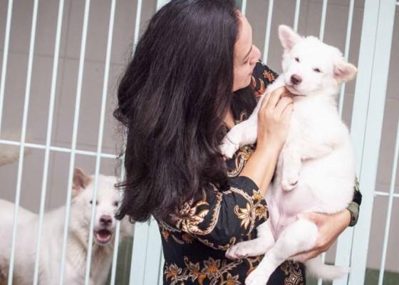 Nusabali.com - penangkaran-anjing-kintamani