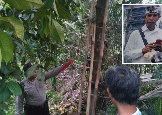 Nusabali.com - bendesa-tewas-jatuh-dari-pohon