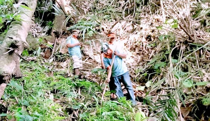 www.nusabali.com-rawan-bencana-ratusan-pohon-ditanam-di-hutan-pedawa
