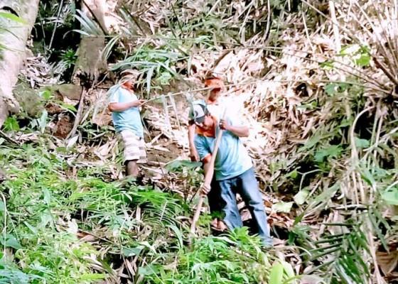 Nusabali.com - rawan-bencana-ratusan-pohon-ditanam-di-hutan-pedawa