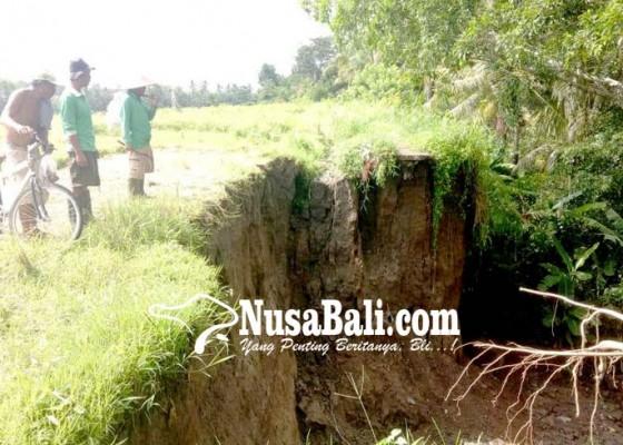 Nusabali.com - perbaikan-saluran-irigasi-subak-ditarget-desember