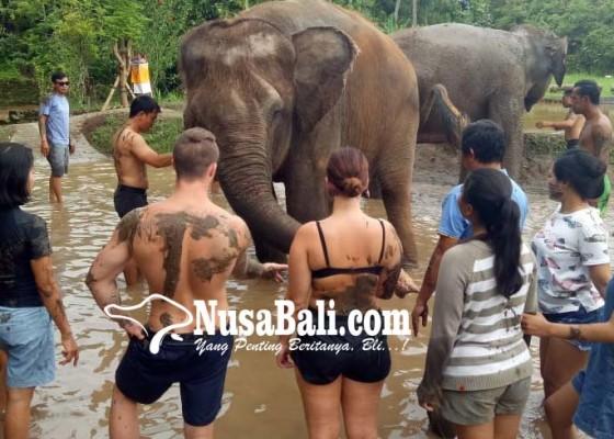 Nusabali.com - gajah-bali-zoo-bisa-diajak-mandi-bareng