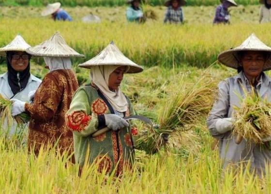 Nusabali.com - distan-kembangkan-potensi-pertanian-berkualitas
