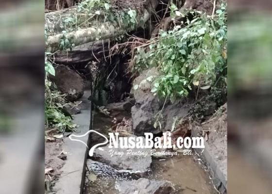 Nusabali.com - hektaran-sawah-tak-teraliri-air