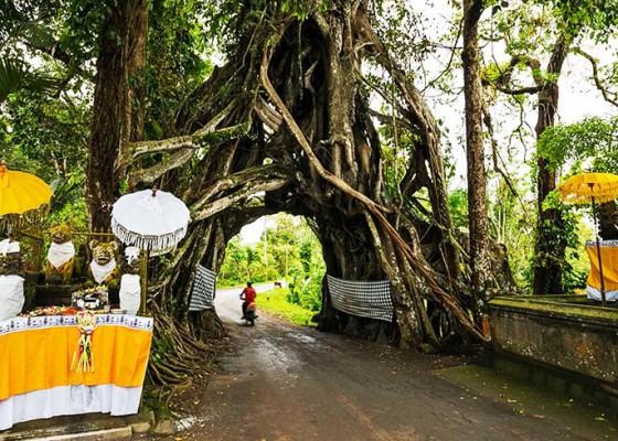 Nusabali.com - mengapa-kebanyakan-orang-hindu-bali-membunyikan-klakson-ketika-lewat-di-tempat-yang-dianggap-keramat