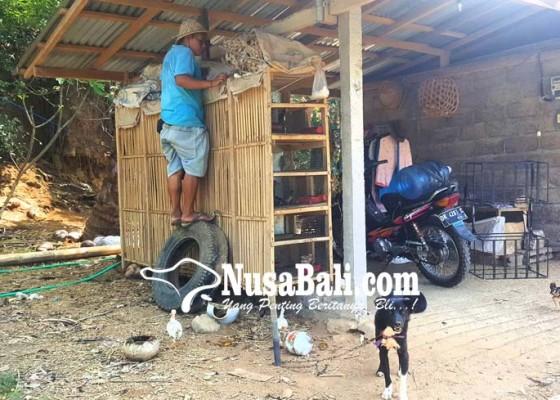 Nusabali.com - desa-pakraman-bengkala-sahkan-perarem-rabies