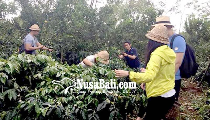 www.nusabali.com-coffee-tour-di-bali-dituntut-kreatif