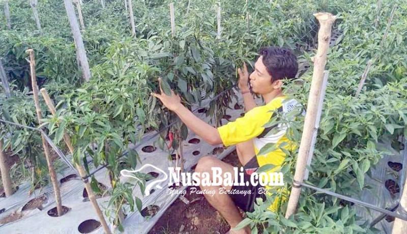 www.nusabali.com-krama-munti-bertani-hortikultura-di-lahan-gersang