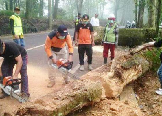 Nusabali.com - pohon-tumbang-di-jalan-raya-suter-lalin-tersendat