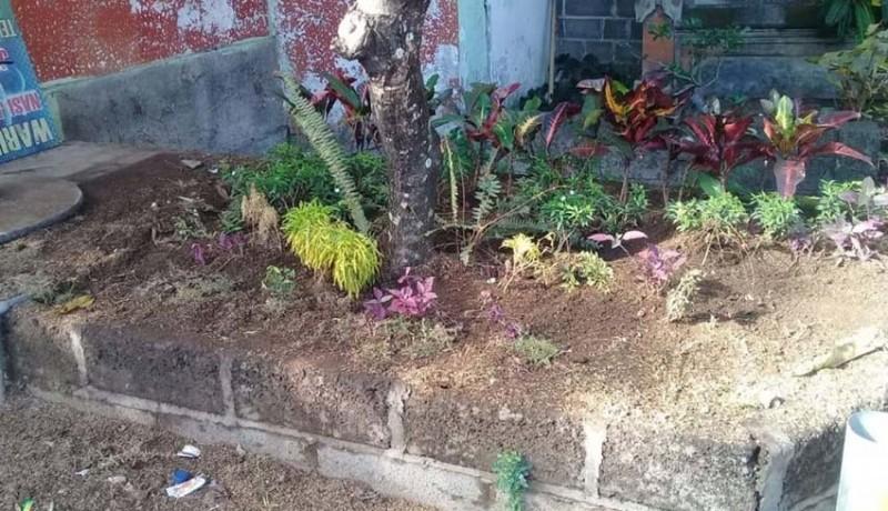 www.nusabali.com-mimih-tanaman-hias-kota-pun-dicuri