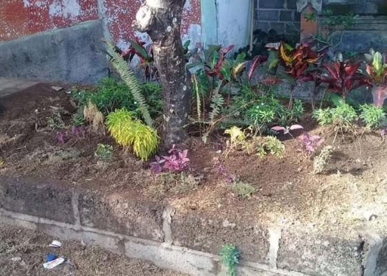 Nusabali.com - mimih-tanaman-hias-kota-pun-dicuri