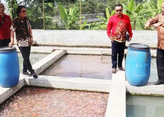 Nusabali.com - dinas-perikanan-fokus-budidaya-ikan-air-tawar-pada-2019