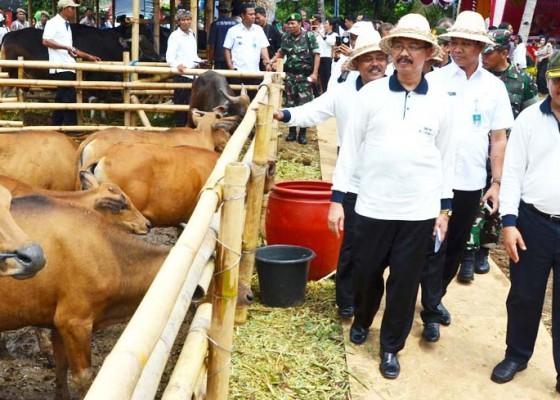 Nusabali.com - kebutuhan-pakan-ternak-mencapai-rp-31-miliar