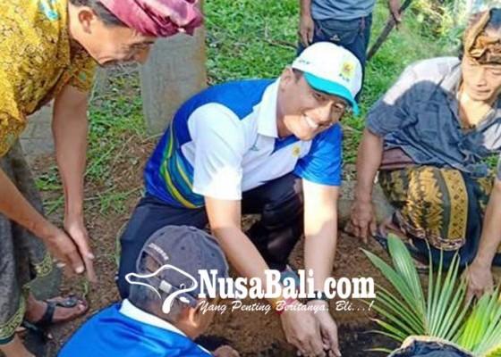 Nusabali.com - peduli-lingkungan-pt-pln-up3-bali-timur-rawat-pohon