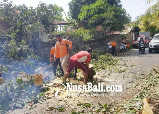 Nusabali.com - akses-desa-panji-terhalang-pohon-mangga