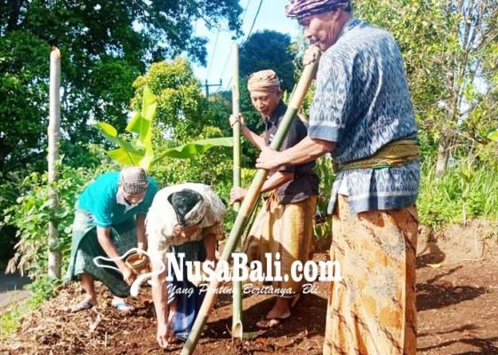 Nusabali.com - setelah-47-tahun-tradisi-ngaga-di-desa-pedawa-kembali-digelar