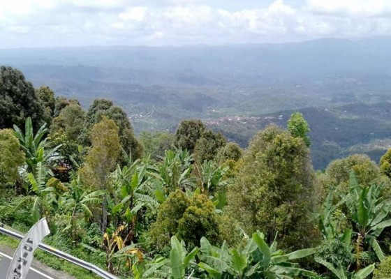 Nusabali.com - petani-munduk-pilih-lupakan-kopi