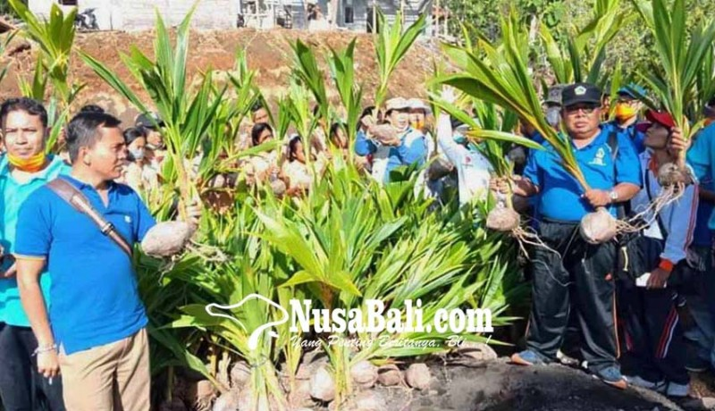 www.nusabali.com-dinas-sosial-tanam-1000-kelapa-di-muntigunung