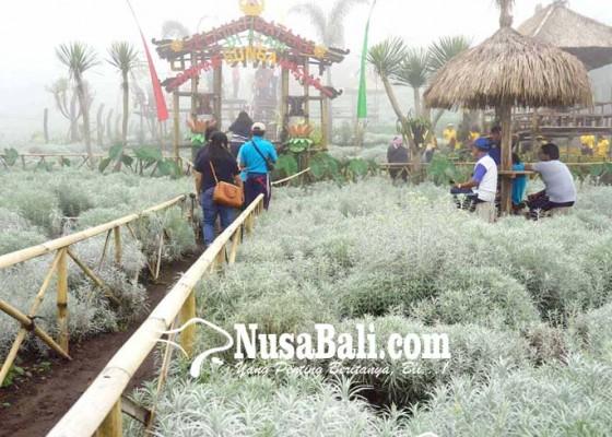 Nusabali.com - akses-jalan-ke-taman-edelweis-sempit