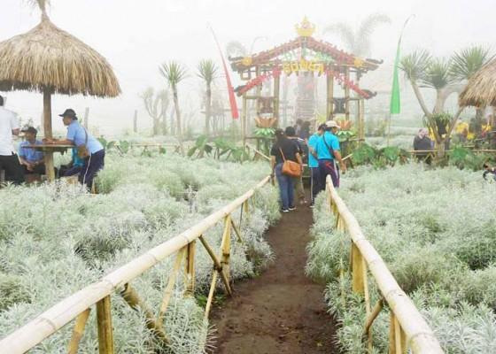 Nusabali.com - harga-jual-tak-seindah-berswafoto