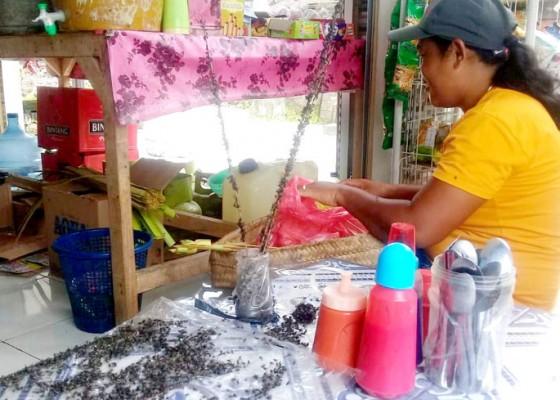 Nusabali.com - diduga-dampak-peternakan-ayam-warga-keluhkan-serbuan-lalat