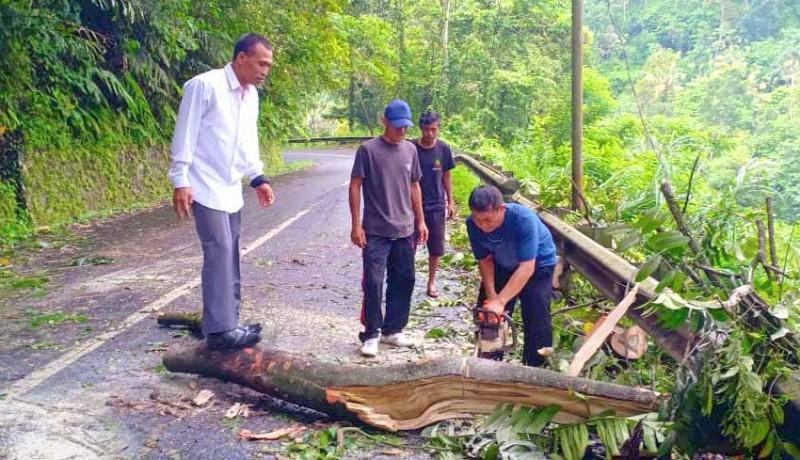 www.nusabali.com-pohon-tumbang-di-jalur-pura-besakih