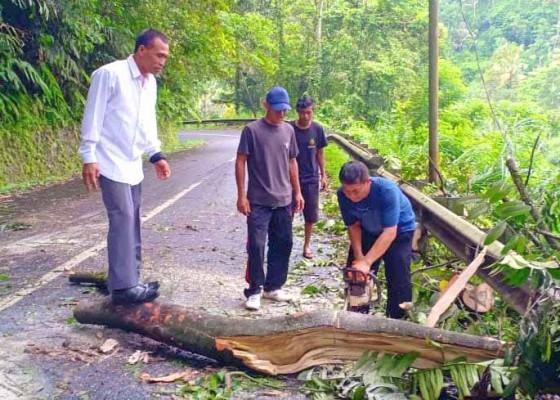 Nusabali.com - pohon-tumbang-di-jalur-pura-besakih