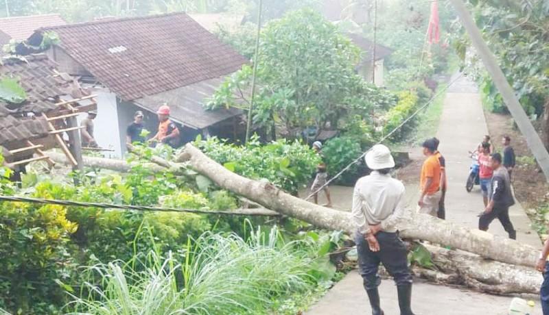 www.nusabali.com-hujan-angin-pohon-jati-tumbang-timpa-atap-dapur-kamar-mandi-dan-garase